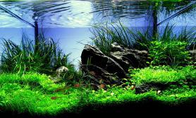 水草缸造景沉木水草泥化妆砂青龙石45CM及以下尺寸设计42