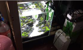 30小缸等成景后准备养米虾水草缸大家推荐下养哪种米虾好看点