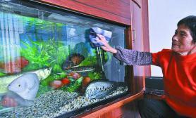 农民富裕增情趣热带观赏鱼游进农家厅堂(图)