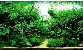 哎呦喂水草缸这缸真漂亮