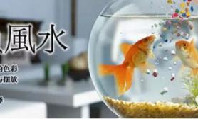 掌握超白鱼缸养鱼风水知识水草缸让你财运有余