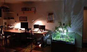 室内水陆缸水草缸夜晚惊艳绽放