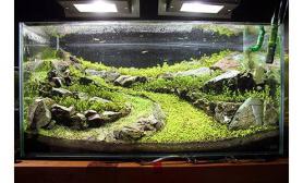 水草缸造景沉木水草泥化妆砂青龙石60CM尺寸设计57