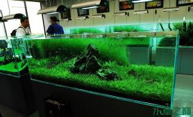 鱼缸造景【分享】ADA自然水族美术馆部分作品欣赏