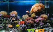 珊瑚礁石底砂的作用