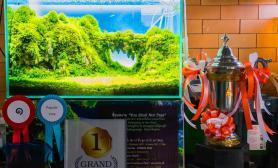 2016泰国清迈造景大赛冠军开缸过程