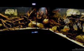 沉木青龙石原生态鱼缸30
