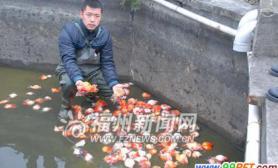 福建一养殖场金鱼大量死亡(图)