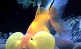 观赏鱼拍摄技巧(图)