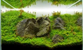 水草缸造景沉木水草泥化妆砂青龙石45CM及以下尺寸设计46