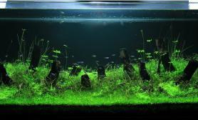 水草缸造景沉木水草泥化妆砂青龙石120CM尺寸设计52