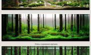 这才是真正的原始森林呢!!!
