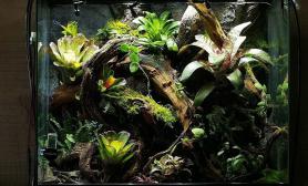 我们的雨林造景大赛以及纪念天野先生