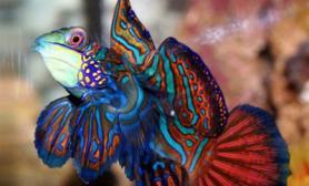 观赏鱼类消化不良如何治疗