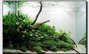 Aquascape of the Month October: