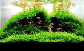 水草缸造景沉木水草泥化妆砂青龙石90CM尺寸设计48