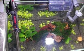 刚开小缸水草缸希望不要暴藻沉木杜鹃根青龙石水草泥