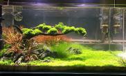 1米缸2个月状态水草缸水草长势还可以水草缸附开缸照鱼缸水族箱(发图留念)