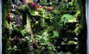 雨林工程案例雨林生态缸100CM缸造景