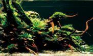 亚马逊水草缸
