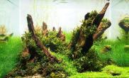 沉木造景大气磅礴狂野小品