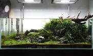 水草缸造景沉木水草泥化妆砂青龙石150CM及以上尺寸设计20