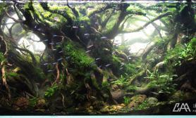 CAA 2015 IAPLC 世界水草造景大赛 NO图片150 《树界降临》