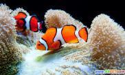 夏季养好热带鱼(图)