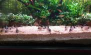 回归初衷水草缸养鱼为主鱼缸水族箱