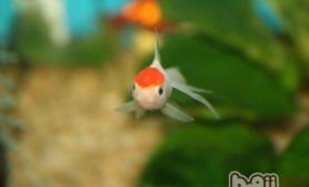 如何预防观赏鱼生病