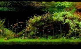 水草造景作品:水草造景(150cm)-105