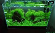 水美水草缸草美水草缸虾美水草缸鱼更美