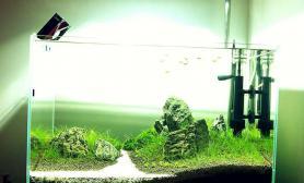 水草造景我的60小缸(一河两岸)
