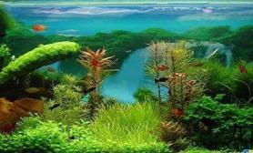 水草缸爆藻
