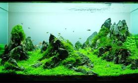 水草缸造景沉木水草泥化妆砂青龙石90CM尺寸设计66