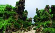 松皮石造景水草缸完美的搭配