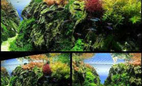 这么艳丽的石景缸你见过吗?