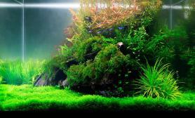 水草缸造景沉木水草泥化妆砂青龙石60CM尺寸设计68
