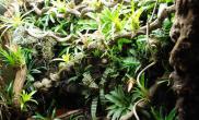 五只青蛙老外玩转水陆雨林生态缸