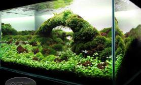 水草缸造景沉木水草泥化妆砂青龙石90CM尺寸设计109