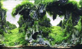 沉木青龙石水草造景120CM尺寸设计56