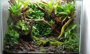 雨林水陆青蛙生态缸