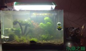 水草造景新开40小缸水草缸持续更新状态水草缸欢迎指导鱼缸水族箱