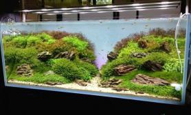水族箱造景常见鱼缸造景方法