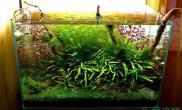 水族箱造景水草造景水草造景创意水草造景60cm