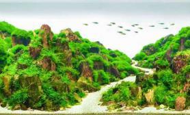 水草造景2016伊士达 46名 只愿身在此山中