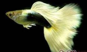热带鱼对水质的要求有哪些