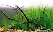 模拟原生环境小树枝水草造景开缸过程
