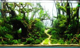 写生水草缸造景沉木精致无比化妆砂青龙石90CM尺寸设计