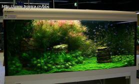 德国koelle-zoo店里的展示缸